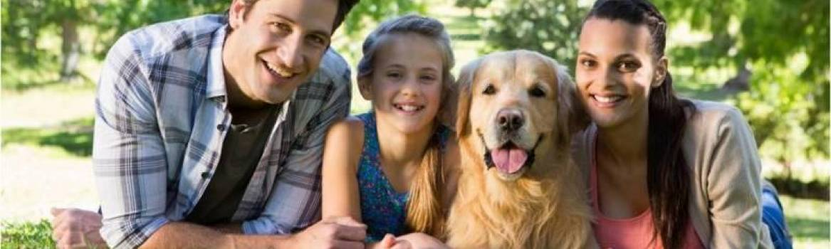 How to Train Your Golden Retriever to be Kid-Friendly