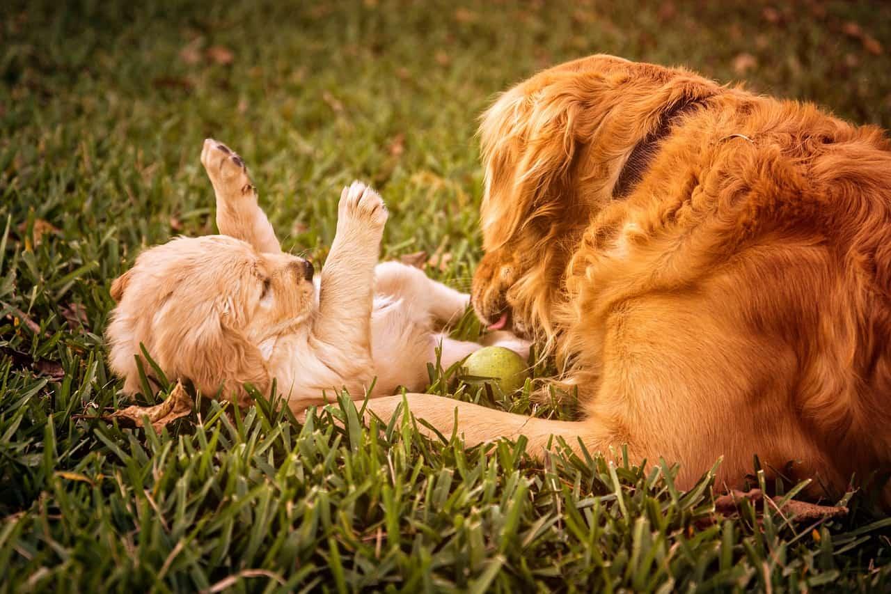 puppy-823190_1280
