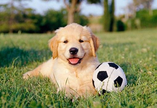 Games and Tricks to do at home with your Dog