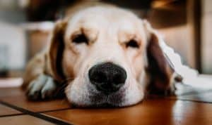 Hot Spots and Your Dog
