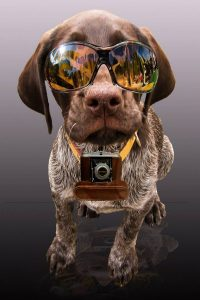 Taking Pictures Of Your Dog