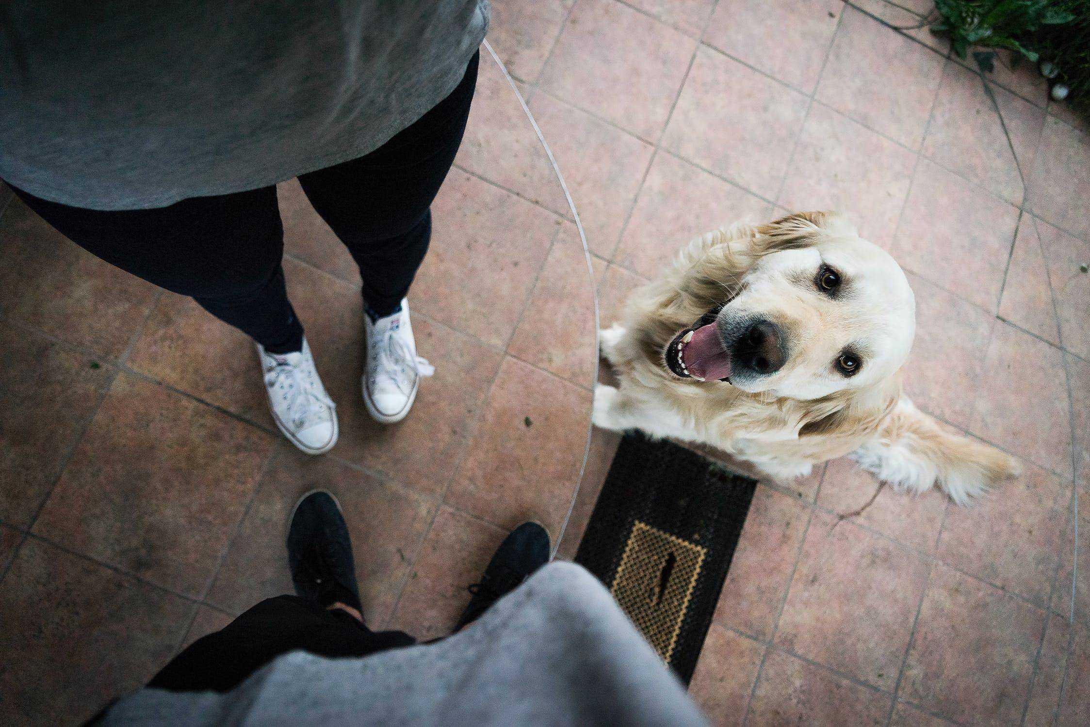 Attention Seeking Behavior in dogs