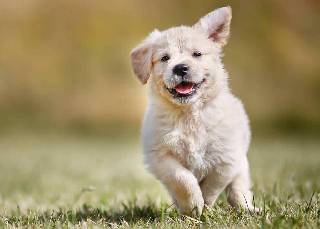 CoronaVirus and Your Dog - covid-19