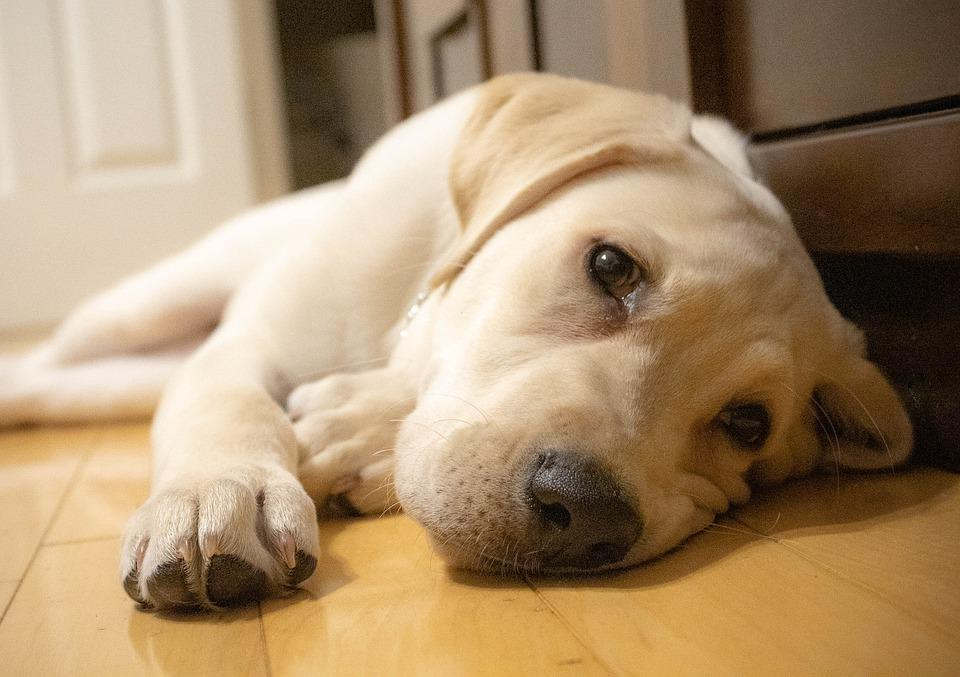 Natural Ways to help your Dog with Separation Anxiety