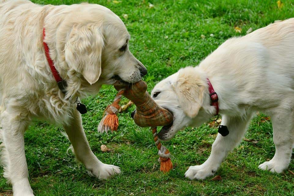 Socialize your Puppy with other Dogs and Humans