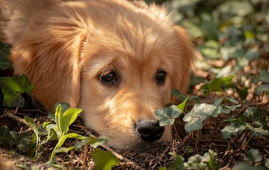 How to Find and Remove Ticks and Fleas from Dogs