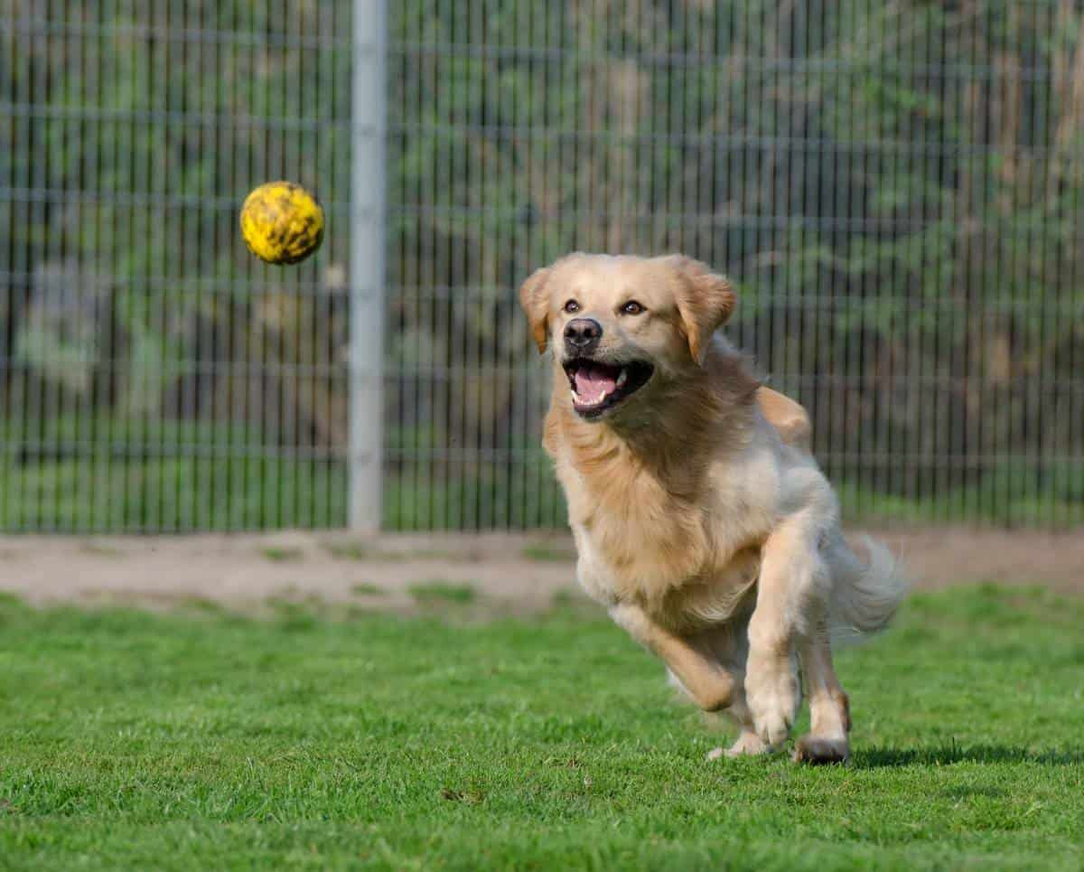 All You Need to Know About Flyball