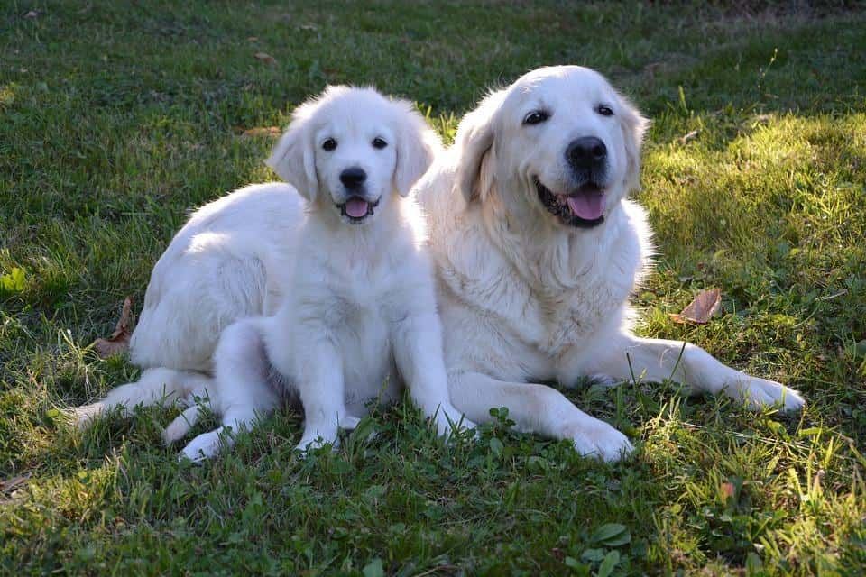 Taking Care of Your Dog - Daily and Weekly Tasks