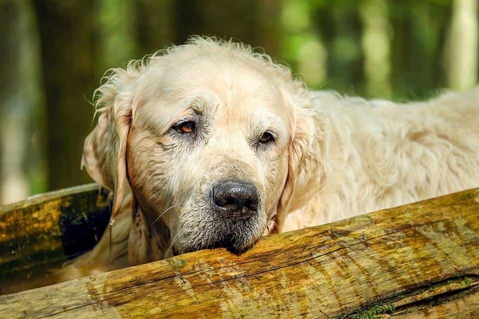 Senior Dog Health Problems and Simple Tips to Prevent Them