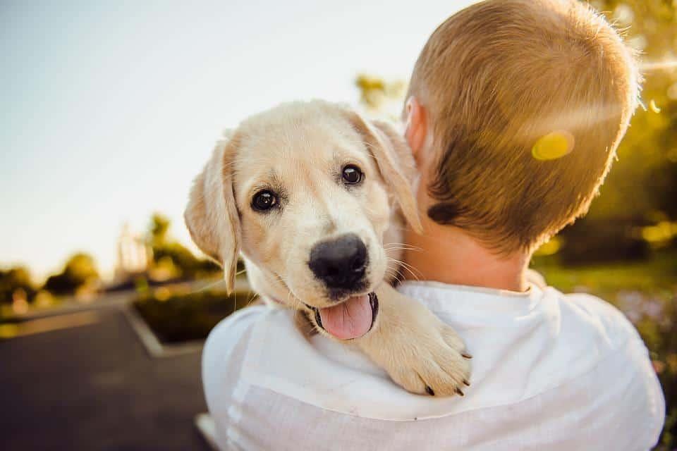 golden retriever best dog