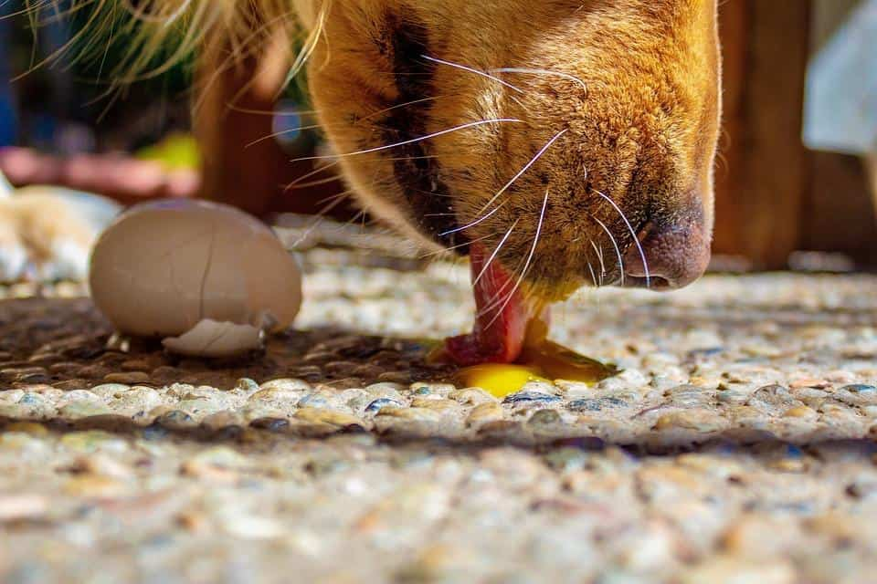 the Best High-Protein Dog Foods for Golden Retrievers