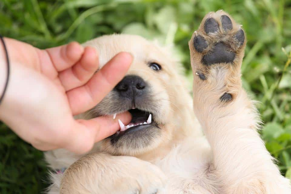 Dogs and Allergies: Am I Allergic to Dogs?