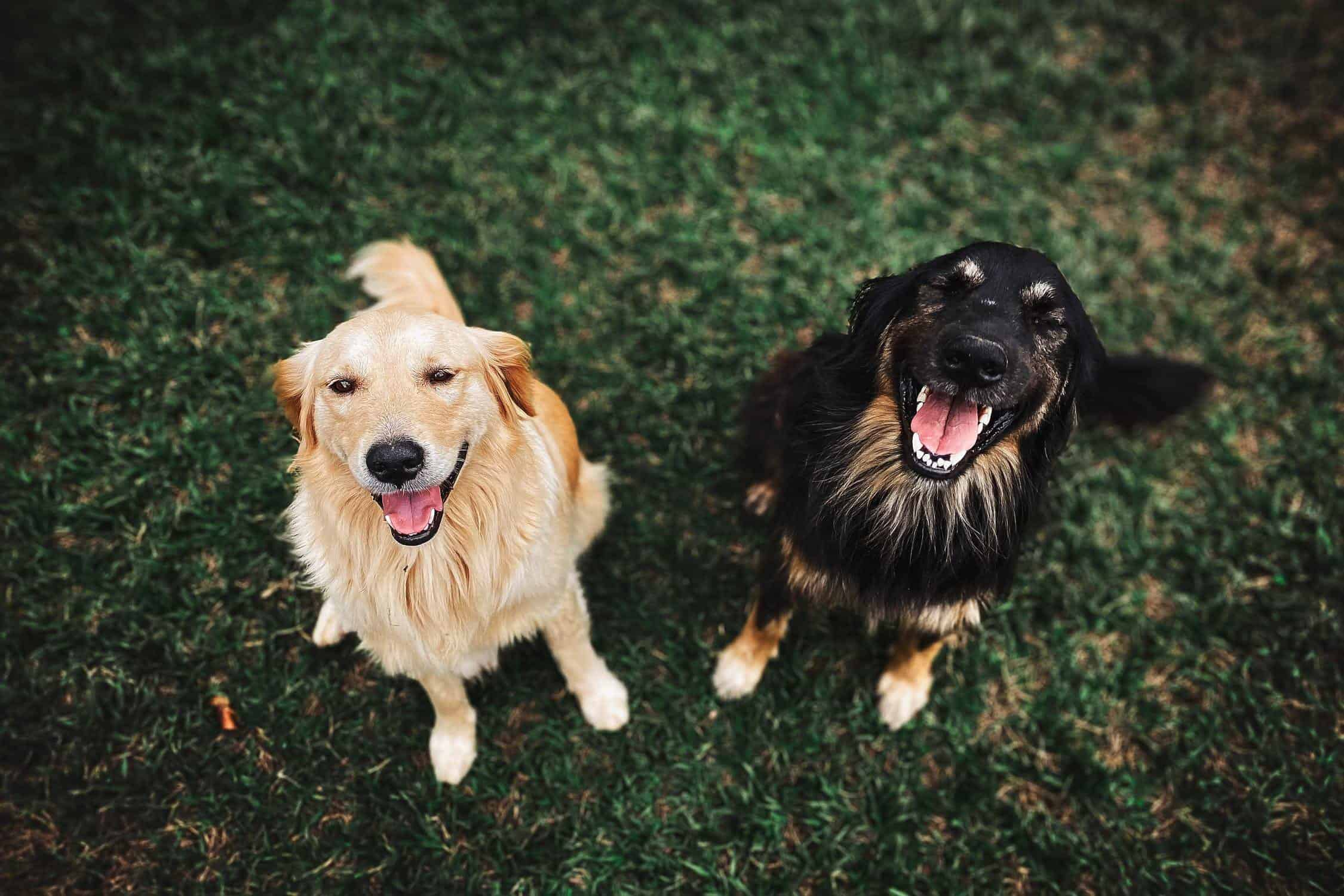 How to Introduce Dogs - dog socialization