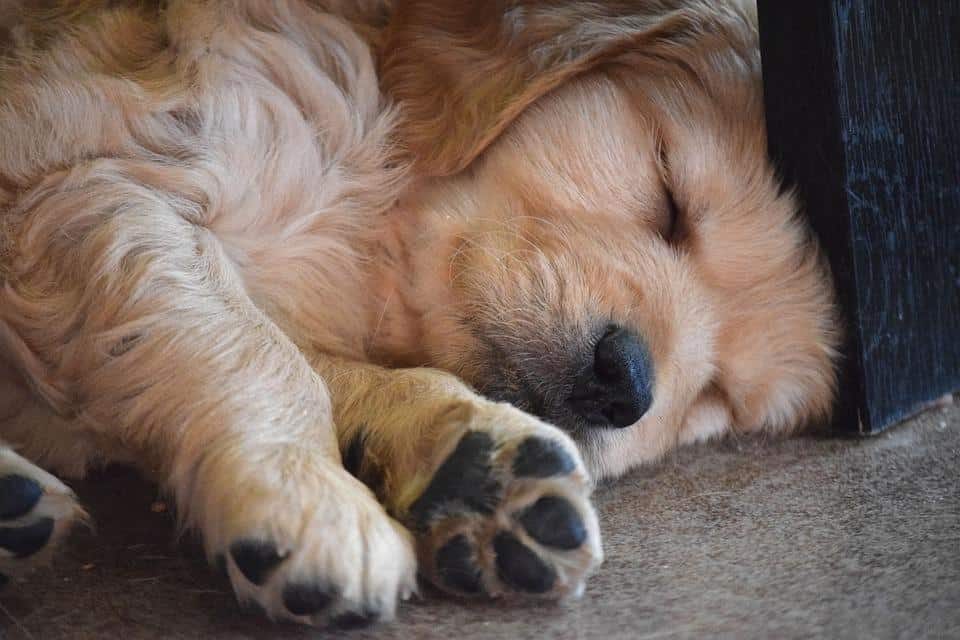 How to Choose Bedding for Your Dog