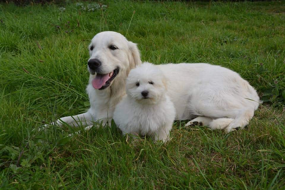 Socialization During Social Distancing - covid19 and dogs