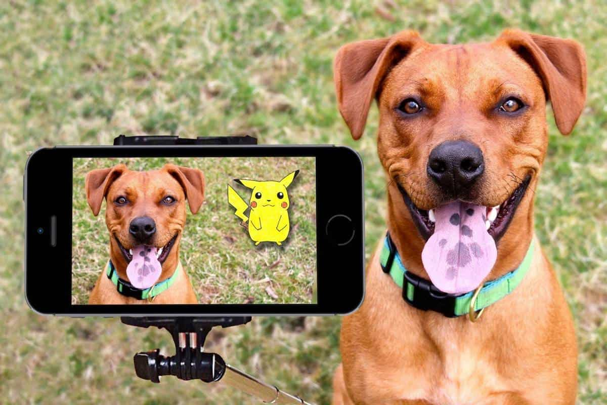 Tips For Taking The Best Pictures and Photo Of Your Dog
