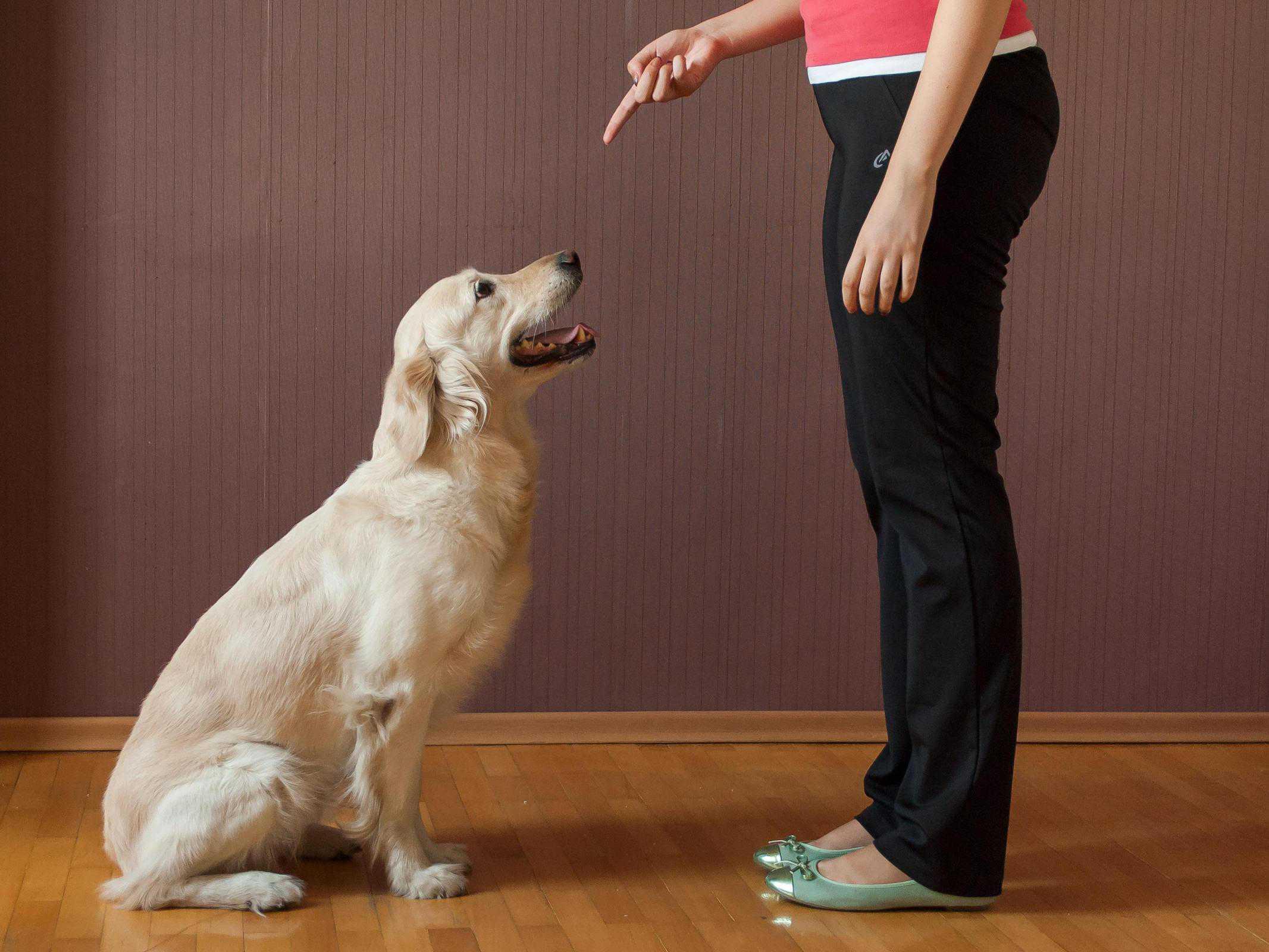 train your dog to Sit - dog training